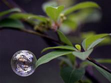 木の葉に止まりそうなシャボン玉の写真、タイトルは一期一会