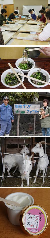 朝原(あざばら)やぎファーム<BR>(写真うえから)濱村民夫さん・あけみさんご夫妻、可愛い山羊たち、その乳で作ったヤギ・アイス
